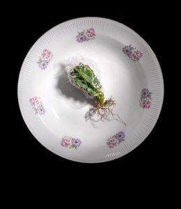 "Natalia Rakowska, ""Portraits"" Series, Cactus"