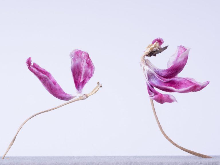 suszone kwiaty, fotografia artystyczna, martwa natura, różowy, fiolet, taniec, ilustracja, abstrakcja, martwa natura
